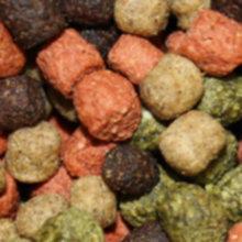 Koifuttermischung koimix premium teichfuttermix for Kleine teichfische