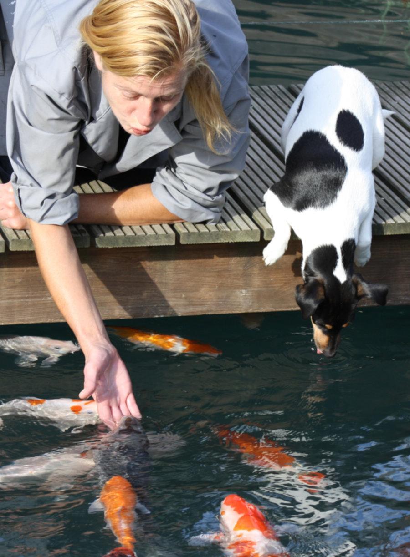 Koigarnelen rote shrimps koisnacks optimal f r die for Beliebte teichfische