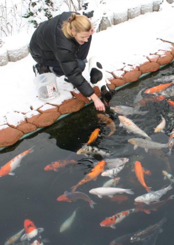 Koifutter winterfutter sinkfutter energiefutter koi for Was fressen teichfische